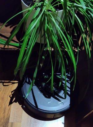 Roomba i7+ vs kasvi