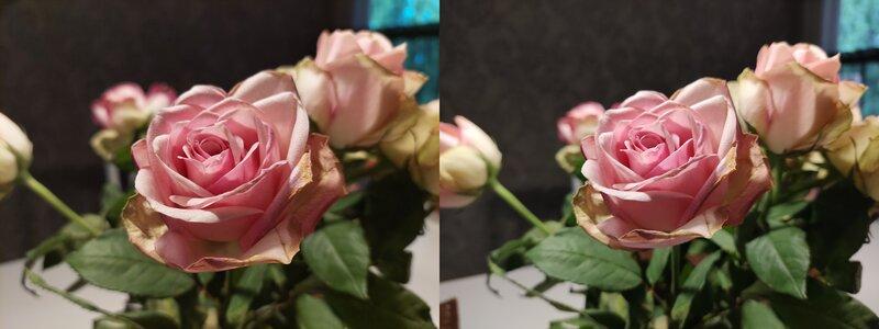 Galaxy A52 5G:llä ja Moto G100:llä otettu kuva ruususta