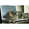 Dell: Kannettavamme ei haise enää kissanpissalta