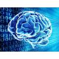 ibm-chip-human-brain-robot-overlord.jpg