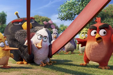Roviolta vahva avaus vuodelle – Angry Birds -elokuvalle tulossa jatkoa