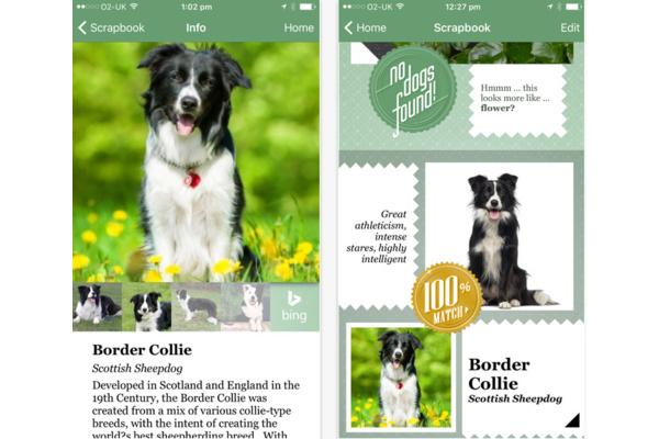 Microsoft julkaisi tekoälysovelluksen, joka tunnistaa koiria