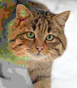 Mozilla esitteli uuden projektin: Tehostaa JPEG-kuvien pakkausta