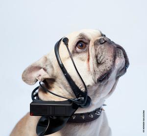 Uskoisiko tuota - Raspberry Pi -pohjainen laite pyrkii kääntämään koirien kielen ymmärrettäväksi