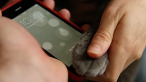 iPhone 5S fingerprint scanner easily registers cat's paw