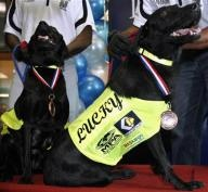 Lucky and Flo receive awards in Malaysia