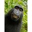 Oikeustaistelu apinan ottamasta selfiestä päättyi
