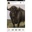 Google Play Music finally arrives for iOS
