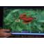 Open webOS ported to Galaxy Nexus