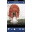 Pandora 4.0 comes to iOS, Android; heading to WP8
