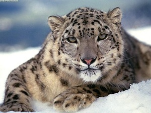 Apple patches over 30 bugs in OS X Snow Leopard